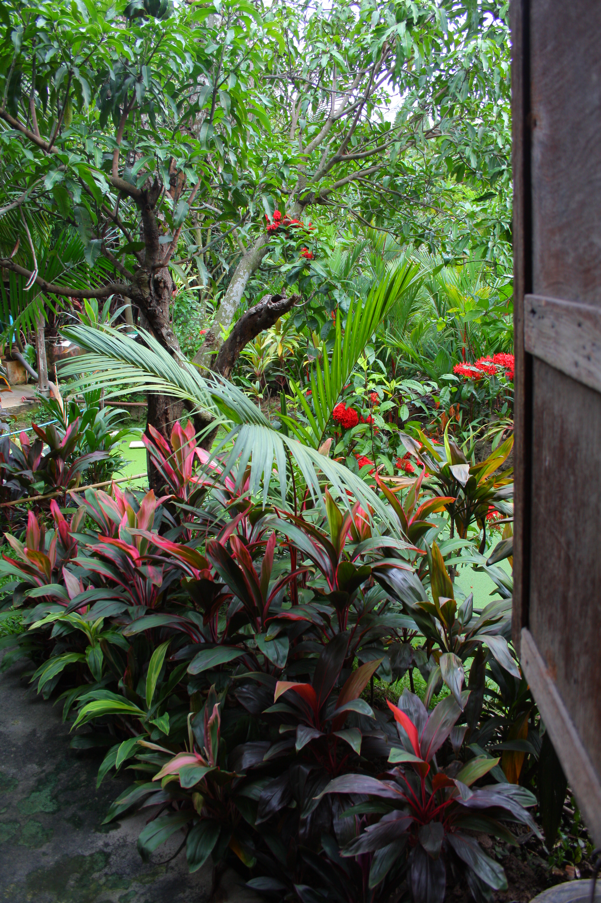 New Service From Our Homestyle Garden Near Bangkok Rental